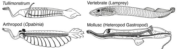tully-monster-illustrations.jpg