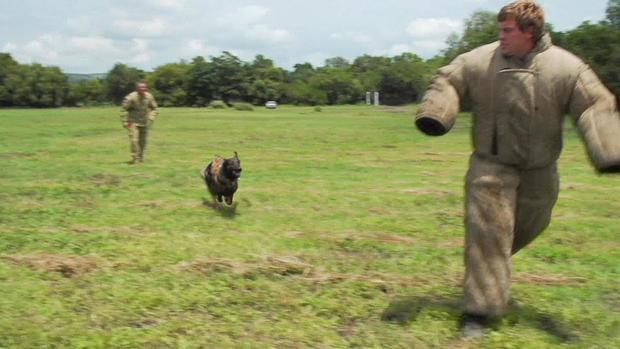 d2-patta-skydiving-dogs-carter-redman-pkg-transfer6.jpg