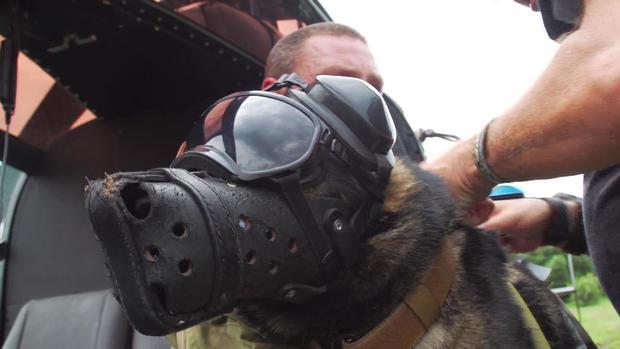 d2-patta-skydiving-dogs-carter-redman-pkg-transfer2.jpg