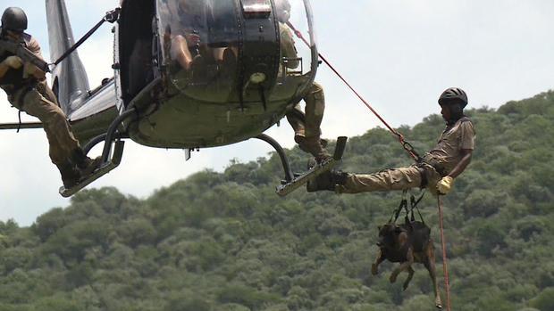 d2-patta-skydiving-dogs-carter-redman-pkg-transfer9.jpg