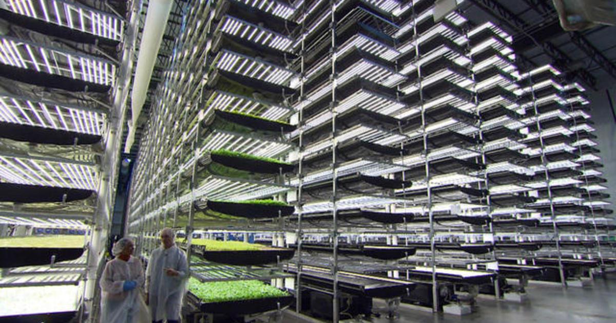 How Aerofarms Vertical Farms Grow Produce Videos Cbs News