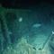 wwii-shipwreck-bluefields.jpg
