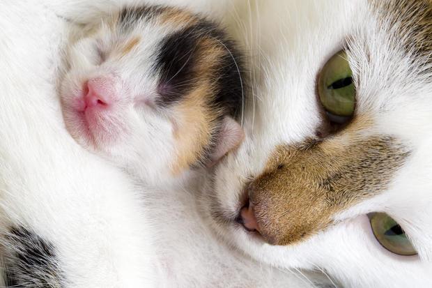 cat-and-kitten.jpg