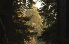 Nature: Redwoods