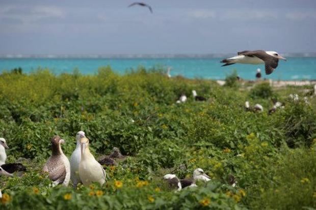 papahanamokuakea-albatross-at-nw-hawaiian-islands.jpg
