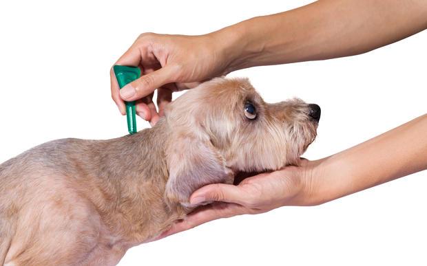 Cat Flea Treatment In Canada