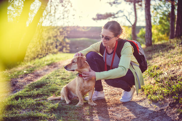 10 things you need to know about Lyme disease in dogs
