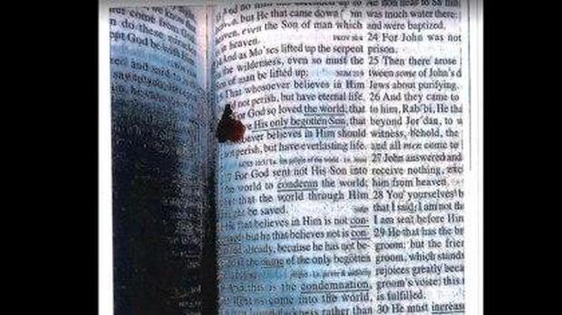 blood-bible.jpg