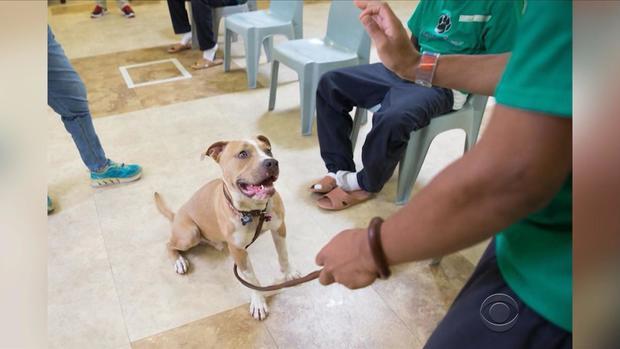 martinez-rescue-dogs-2-2017-5-13.jpg