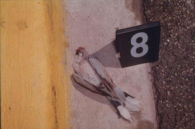 Bird killed in versace shooting