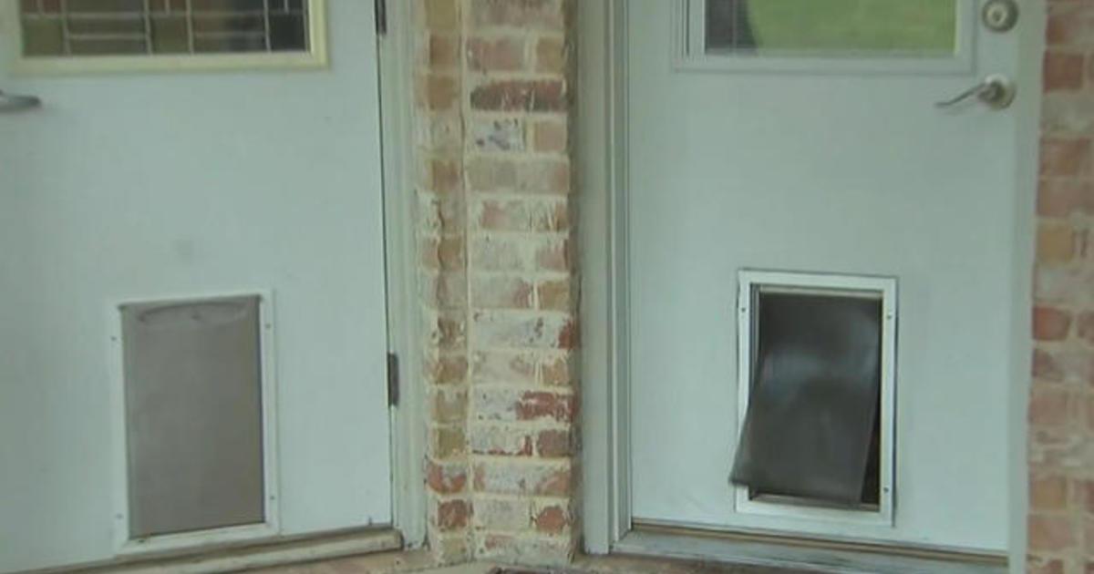 caught on video suspect breaks into texas home using doggy door cbs news