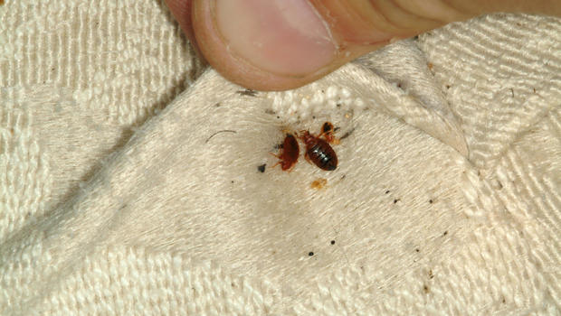 Does D Earth Kill Bed Bugs
