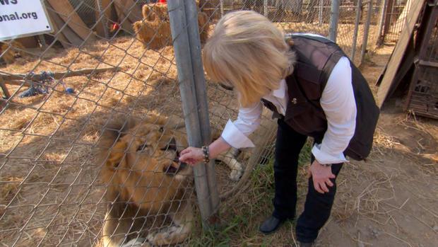 ot-lionlifesaversb.jpg