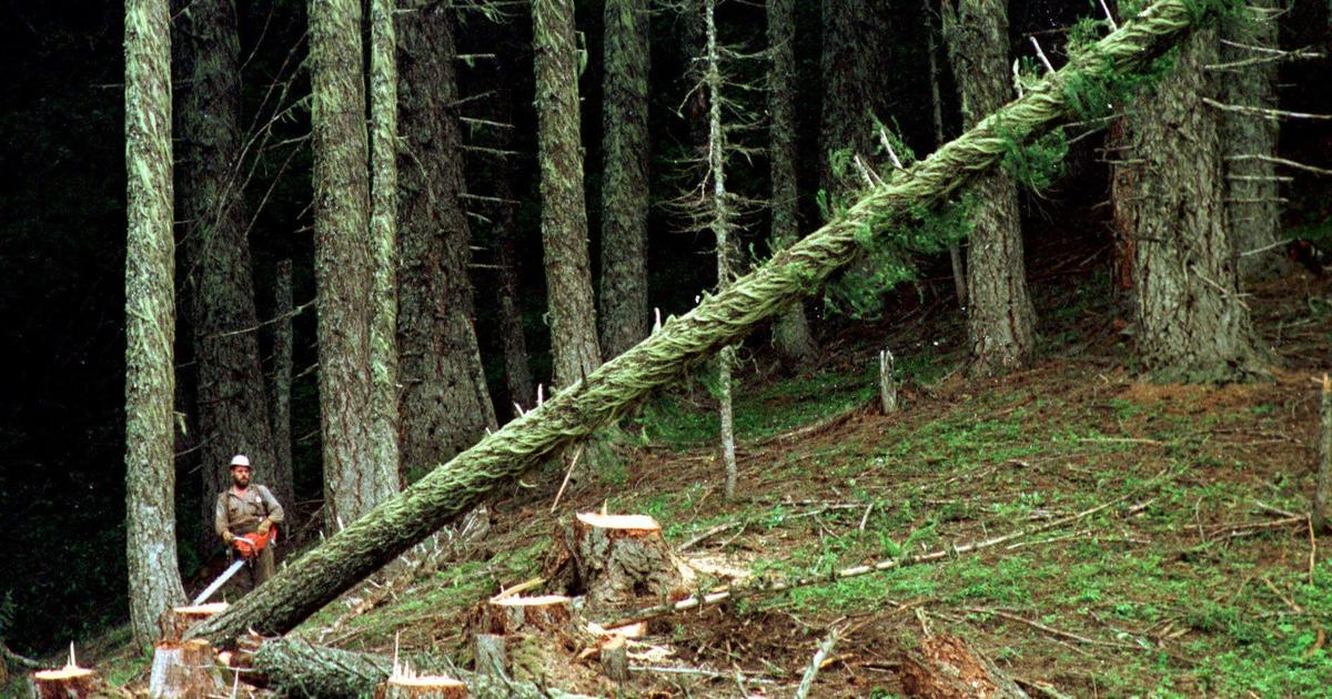 U.S. slaps 21 percent duty on Canadian lumber imports