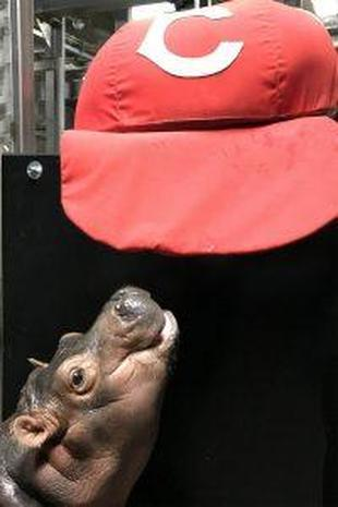 Fiona the hippo: Cutest baby pictures from the Cincinnati Zoo