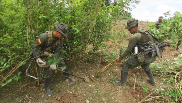 colombia-eradicating-coca-plants-620.jpg