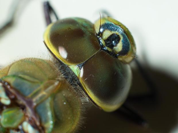 dragonfly-eyes-verne-lehmberg-promo.jpg
