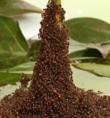 ants2.jpg