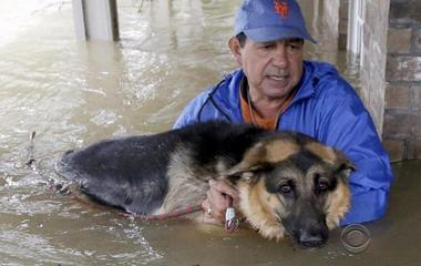 Evacuations and rescues underway for animals, too, in wake of Harvey