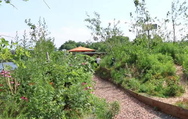 """Repurposing industrial materials to create Swale, a """"floating food forest"""""""