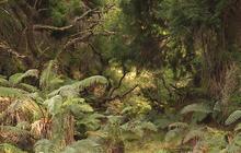 Nature: Hawaiian rainforest