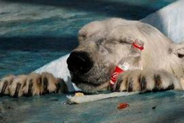 polar-bear-coca-cola.jpg