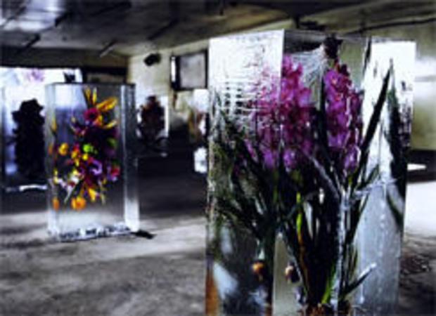 makoto-azuma-flowers-in-ice-244.jpg