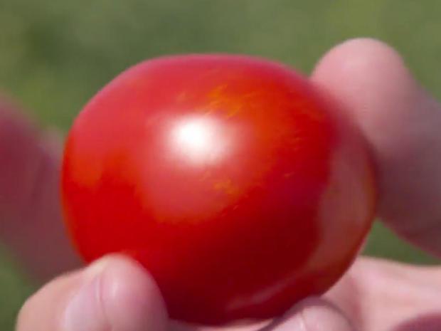 ketchup-heinz-patented-4707-tomato-promo.jpg
