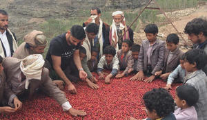 Reintroducing Yemeni coffee to America