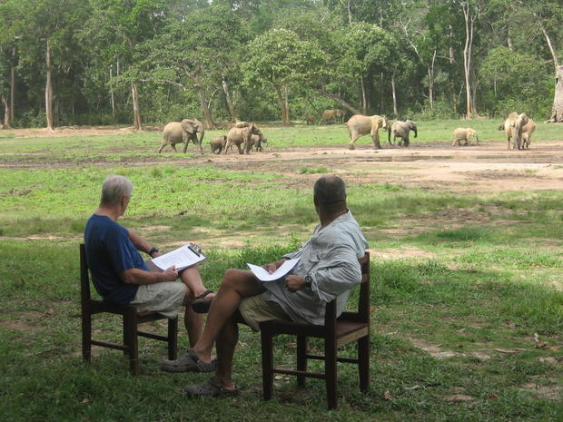 11-simon-radliffe-elephants.jpg
