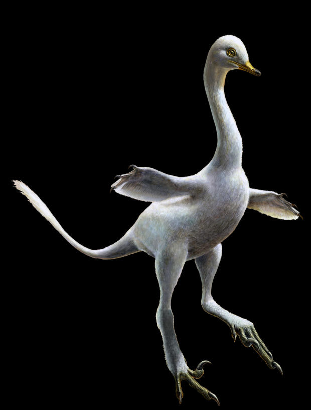 halszkaraptor-lukas-panzarin.jpg