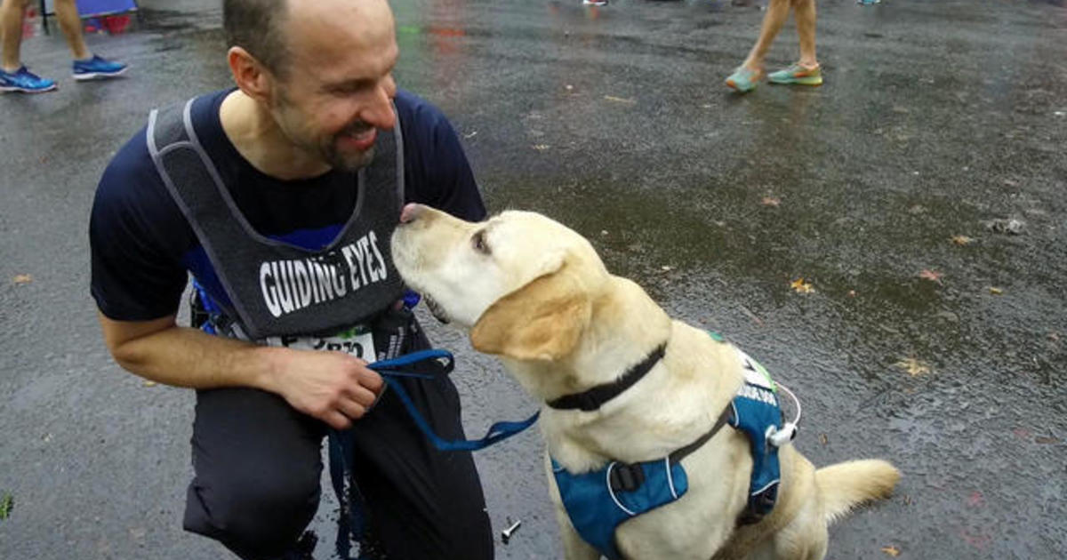 how a blind runner regained his footing with a special guide dog rh cbsnews com Golden Retriever Guide Dogs Golden Retriever Guide Dogs