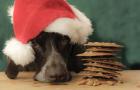 Can I eat Santa's Cookies?