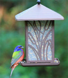 painted-bunting-at-feeder-roy-neher-244.jpg