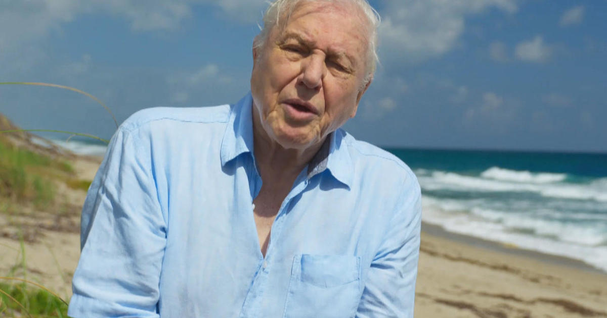 Sir David Attenborough, the voice of Nature - CBS News
