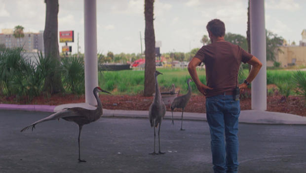 the-florida-project-willem-dafoe-and-birds-620.jpg