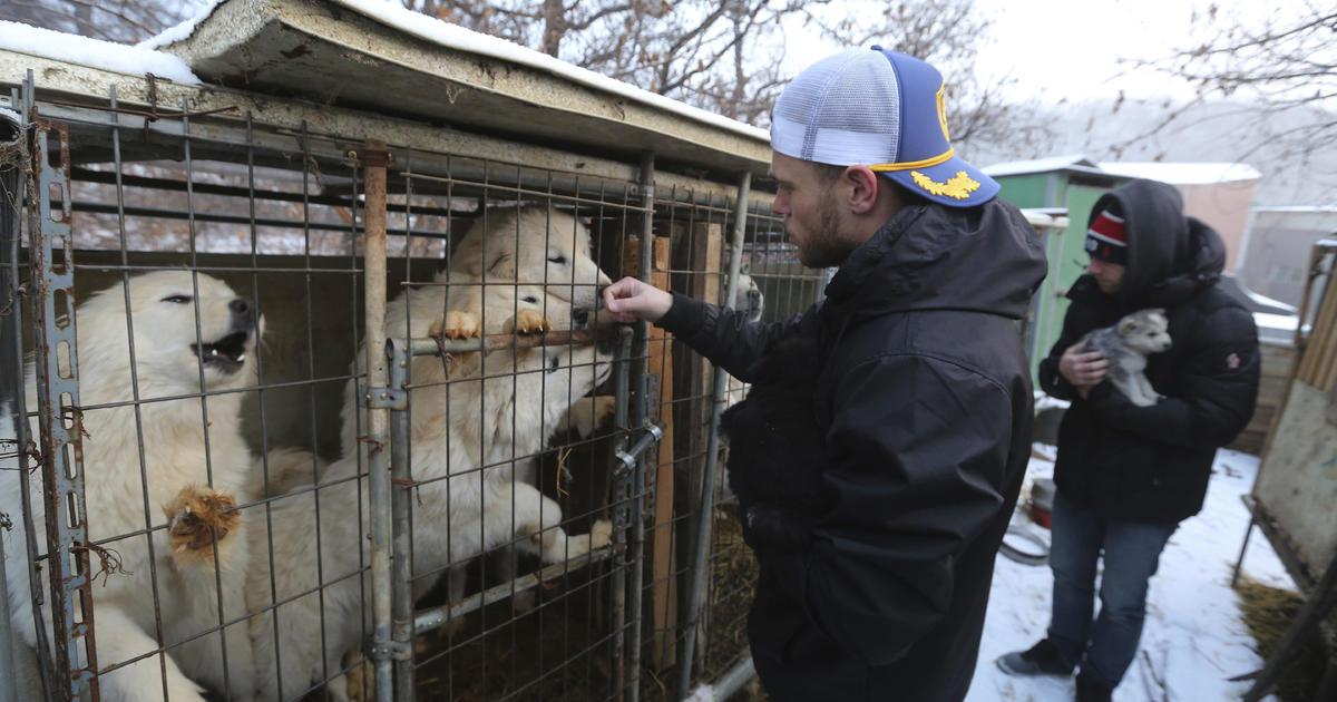 U.S. Olympian tours South Korea dog meat farm
