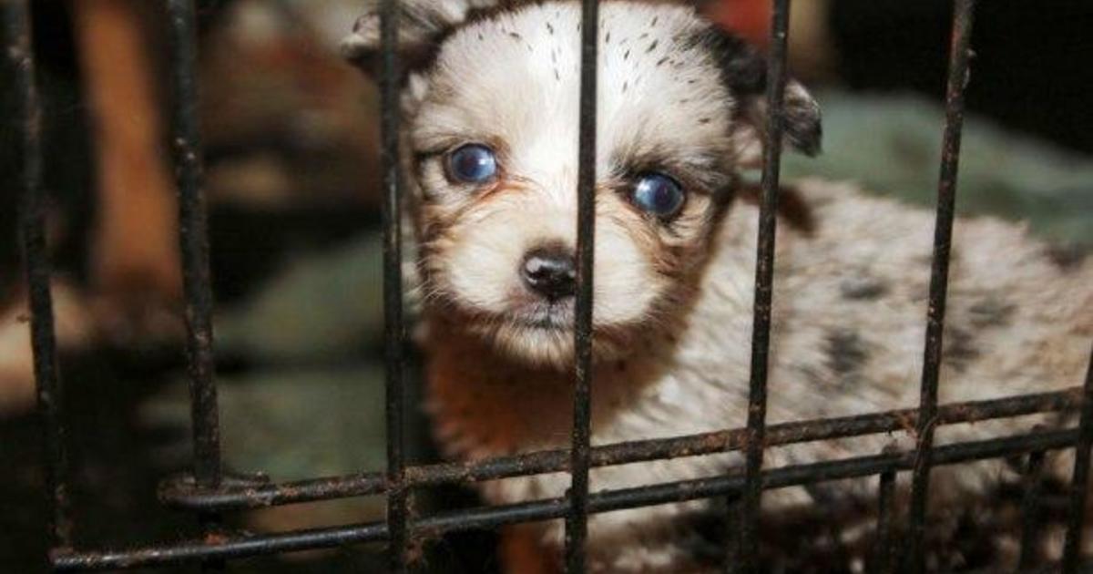 Dog Shows Are Inhumane