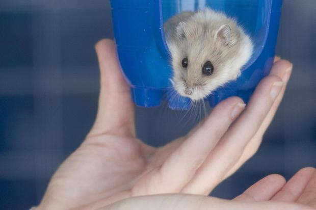 rupert-hamster-4-5-18.jpg