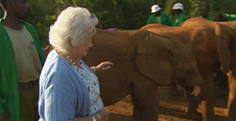 Daphne Sheldrick Saying Goodbye To The Queen Of The Elephants