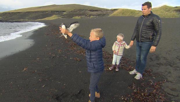 puffins-releasing-puffling-at-shoreline-620.jpg