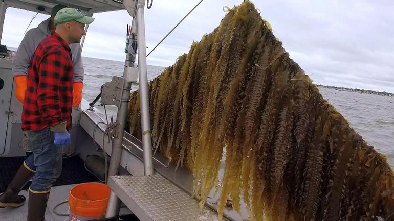 Photo of ocean farmer Bren Smith on 60 Minutes