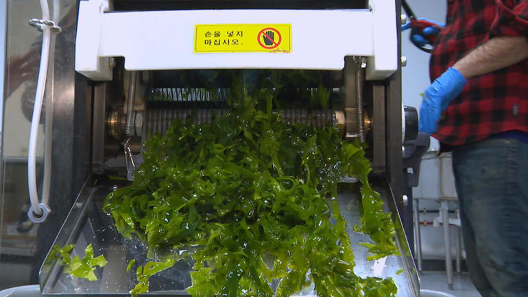 0429-seaweedsg3.jpg