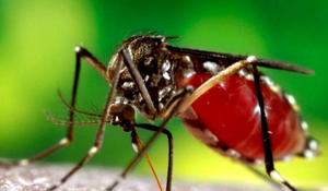 7 dead from rare disease spread by mosquitoes