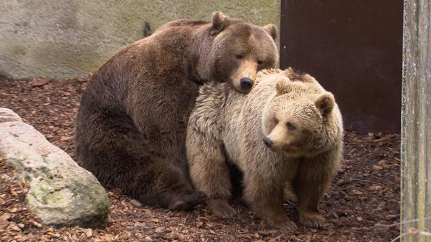 Matchmaking for zoo animals - CBS News
