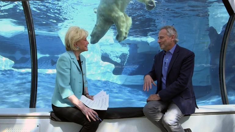 kagans-polar-bear.jpg