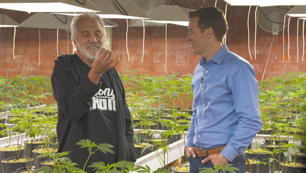 marijuana-tommy-chong-and-ben-tracy-620.jpg