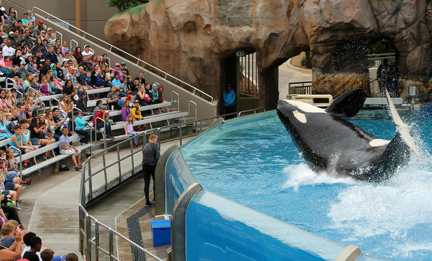SeaWorld unveils its new Orca Encounter show in San Diego
