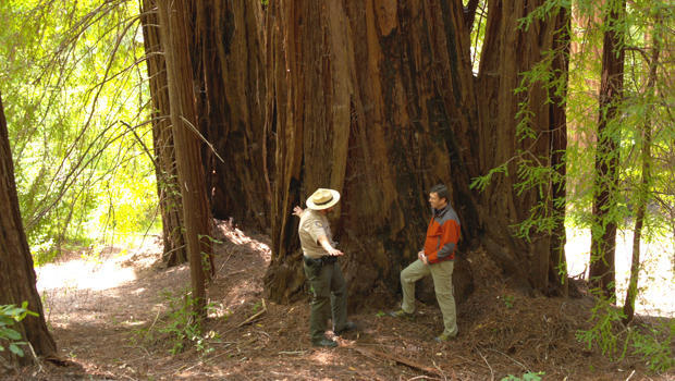 redwoods-lee-cowan-with-ranger-620.jpg