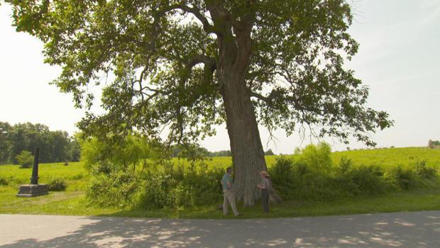 gettysburg-witness-trees-sickles-tree-620.jpg